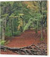 Autumn Blanket Wood Print