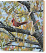 Autumn Cardinal Wood Print