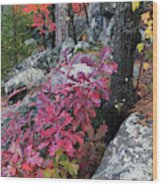 Autumn Color Foliage And Boulders Wood Print