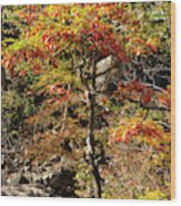 Autumn Color In Smoky Mountains National Park Wood Print