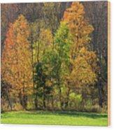 Autumn Colour In Southern Ontario Wood Print