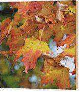 Autumn Colour Wood Print