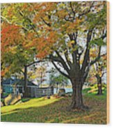 Autumn Day In The Salem Willows Salem Ma Red Wood Print