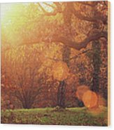 Autumn Forest In Sunlight Wood Print