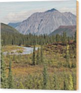 Autumn In Denali Wood Print