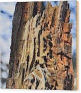 Autumn Knotty Tree Sculpture Wood Print