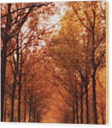 Autumn Lights At Groeneveld Wood Print