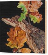 Autumn Oak Leaves And Acorns On Black Wood Print