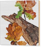 Autumn Oak Leaves And Acorns On White Wood Print