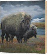 Autumn Plains Bison Wood Print