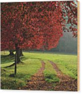 Autumn Trees In Garden Wood Print