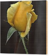 Autumn Yellow Rose Wood Print
