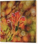 Autumn's Glow 2 Wood Print