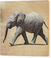 Baby African Elephant Wood Print