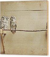 Baby Barred Owls Wood Print