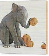 Baby Elephant And Pumpkins Wood Print