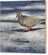 Baby Mourning Dove Wood Print