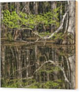 Bald Cypress Trees And Reflection, Six Wood Print