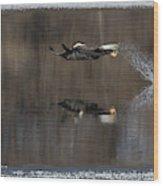 Bald Eagle 2018-13 Wood Print