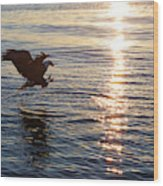 Bald Eagle At Sunset Wood Print
