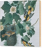 Baltimore Orioles Icterus Galbula Wood Print