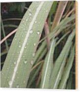 Bamboo And Water Wood Print