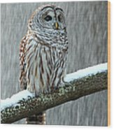 Barred Owl In The Snow Wood Print