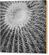Barrel Cactus Black And White Wood Print