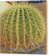 Barrel Cactus Royal Palms Phoenix Wood Print