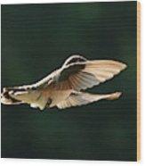 Bashful Hummingbird Wood Print