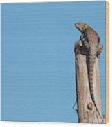 Basking Lizard Wood Print