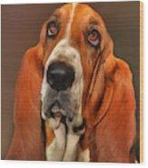 Basset Dog Portrait Wood Print