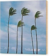 Beach And Coconut Trees Wood Print