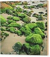 Beach Rocks Covered With Seaweed Wood Print