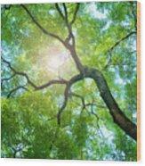 Beams Of The Sun Wood Print