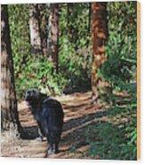 Bear In The Woods Wood Print