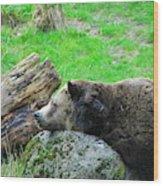 Bear Sleeping On A Rock. Wood Print