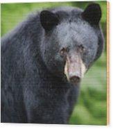 Bear Stare Wood Print