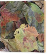 Beauti Fall Wood Print