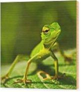 Beautiful Animal In The Nature Habitat Wood Print