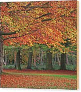 Beautiful Autumn In Park Wood Print