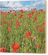 Beautiful Fields Of Red Poppies Wood Print
