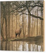 Beautiful Landscape Image Of Still Stream In Lake District Fores Wood Print