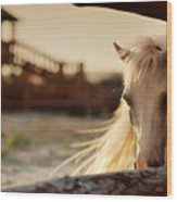 Beautiful, Quiet, White Horse Waits In Wood Print