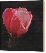Beautiful Wet Rose Wood Print