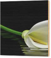 Beautiful White Calla Lily Reflected In Water Wood Print
