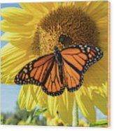 Beauty On The Sunflower Wood Print