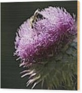 Bee On Thistle Wood Print