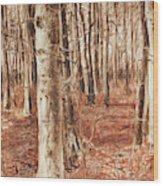 Beech Forest Wood Print