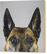 Belgian Sheperd Malinois Dog Looking At Wood Print